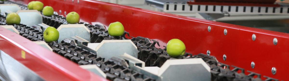 ООО Агро Центр выращивание яблок