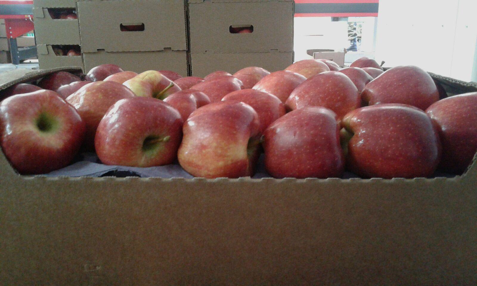 Выращивание яблок в 23